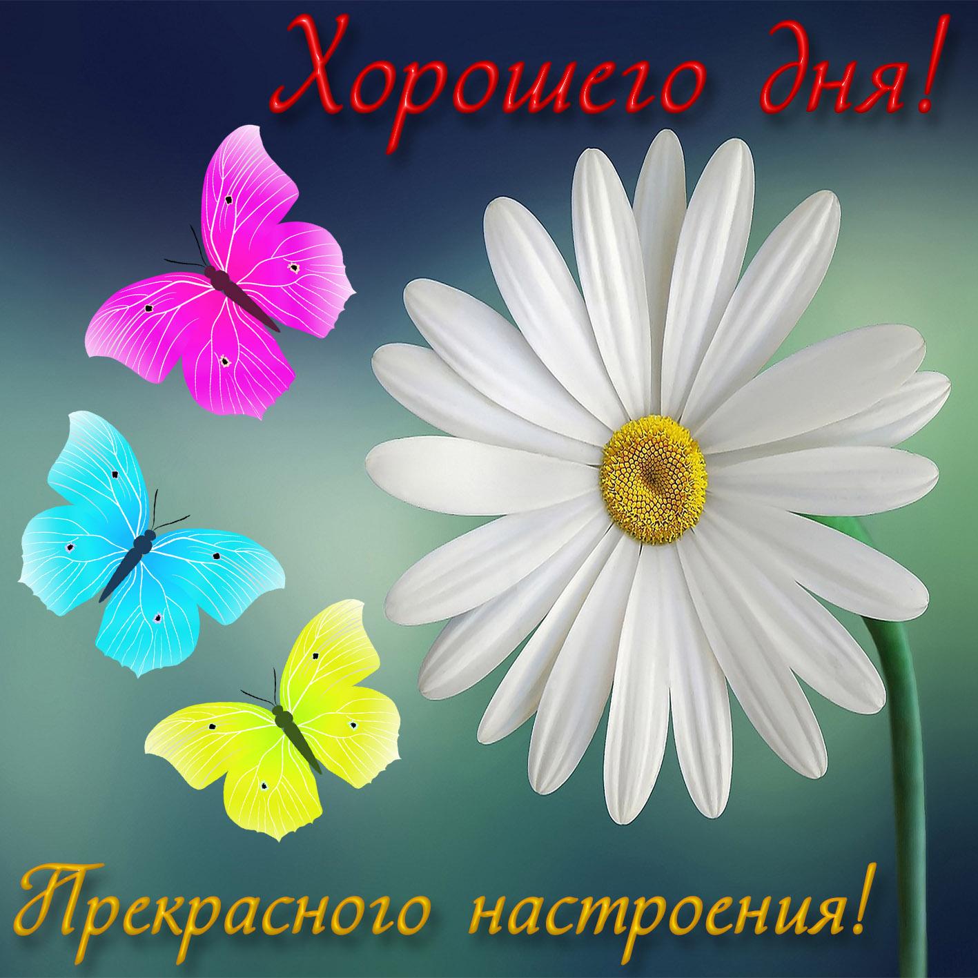 Коллаж открытку, картинка пожелания хорошего дня и отличного настроения