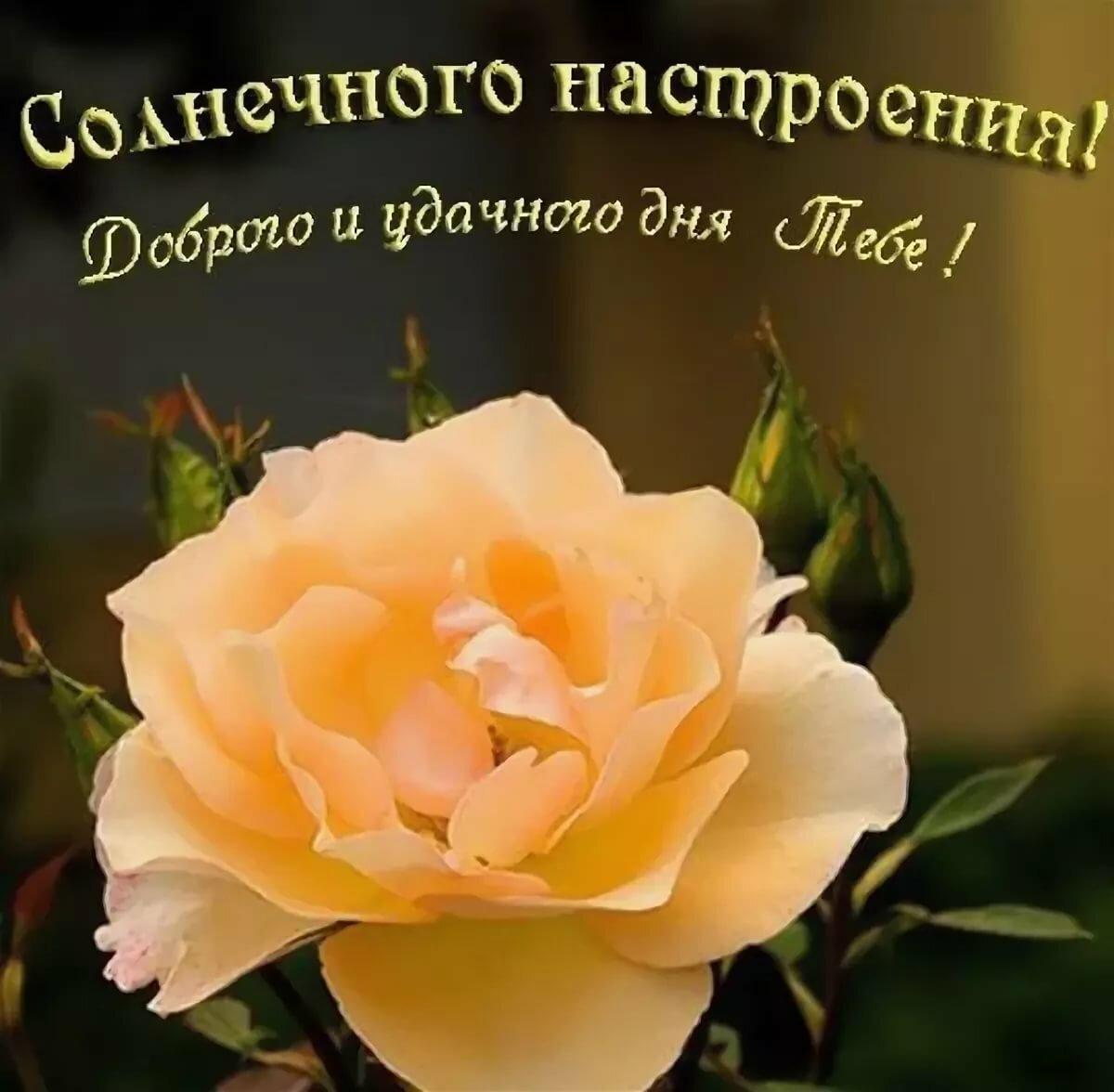 Шар, картинки с пожеланиями хорошего дня милому