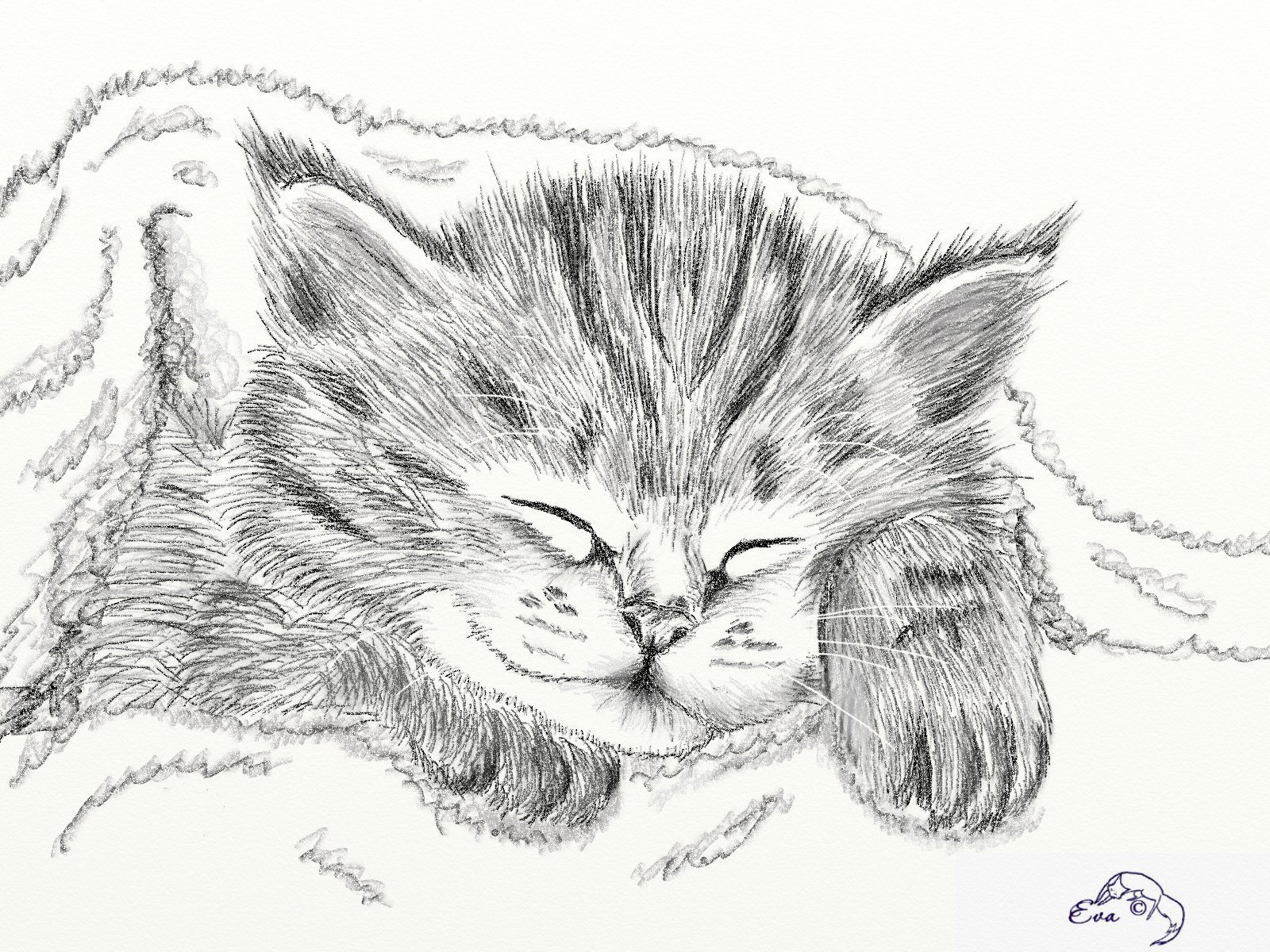 Цветы картинки, рисунки для срисовки кошки карандашом