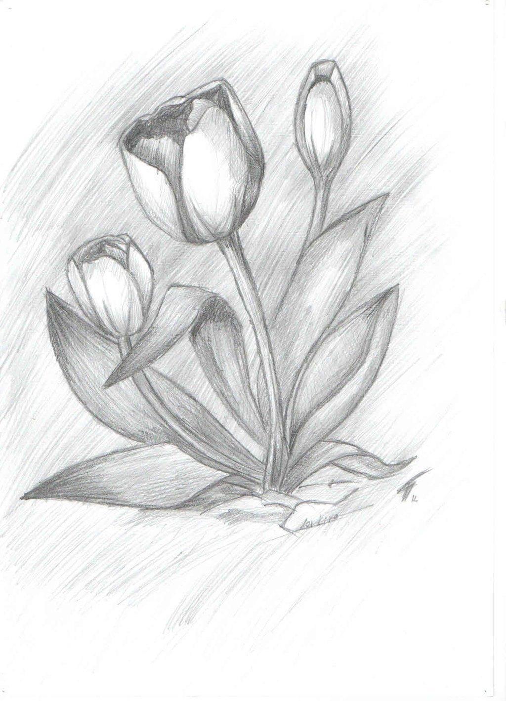 перестану нарисовать красивые и легкие рисунки карандашом для начинающих женщины разного возраста