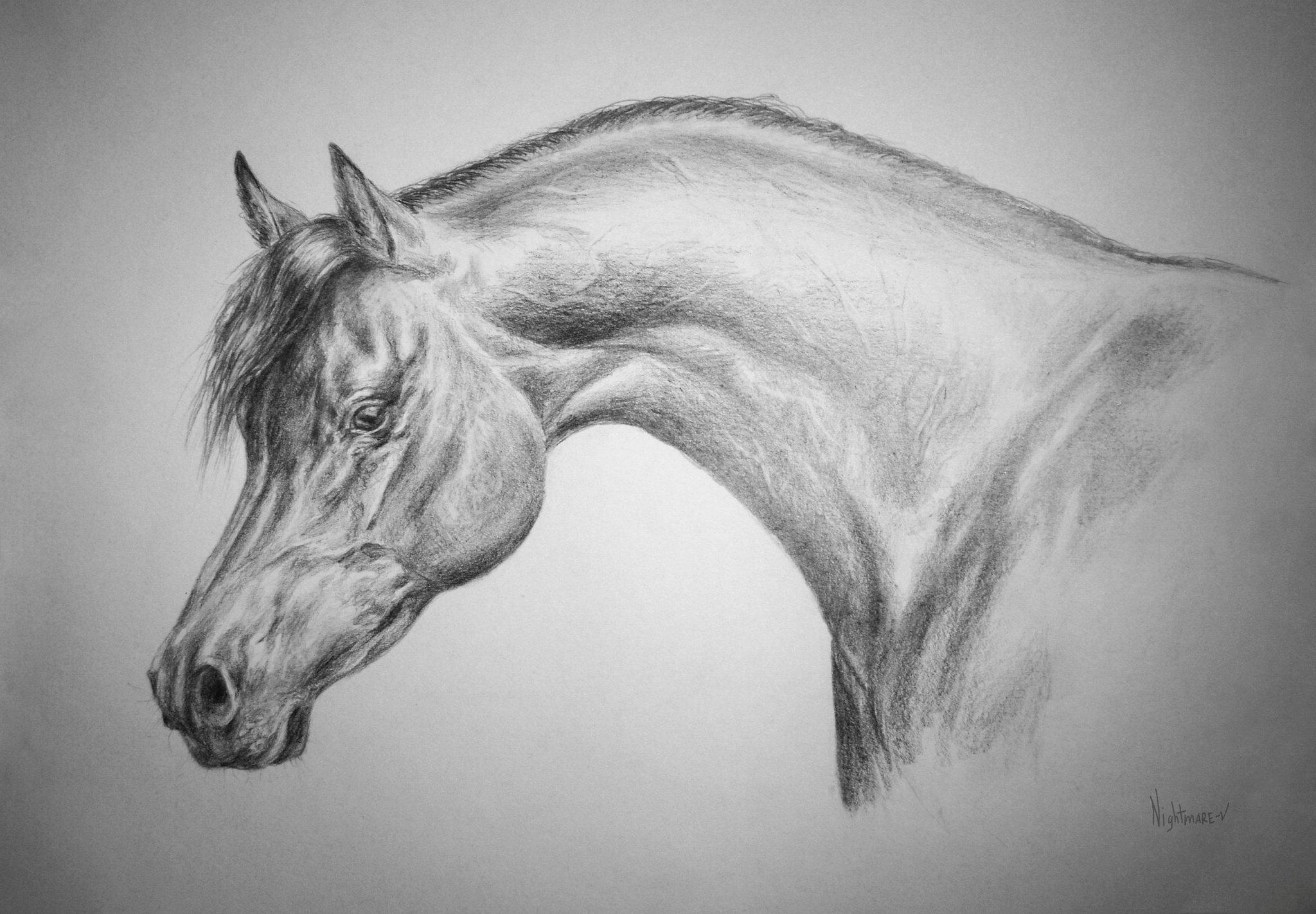 Картинки простым карандашом легкие для срисовки о животных