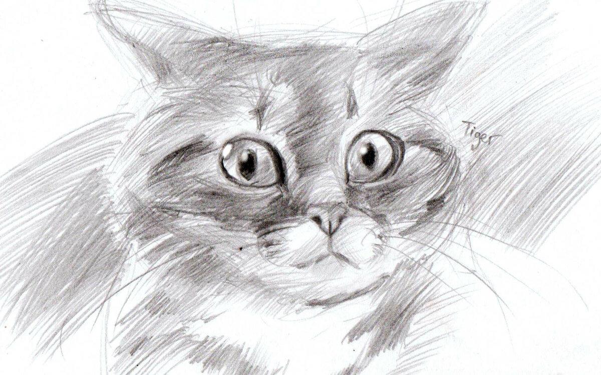 Вышивка, фото рисунок кота