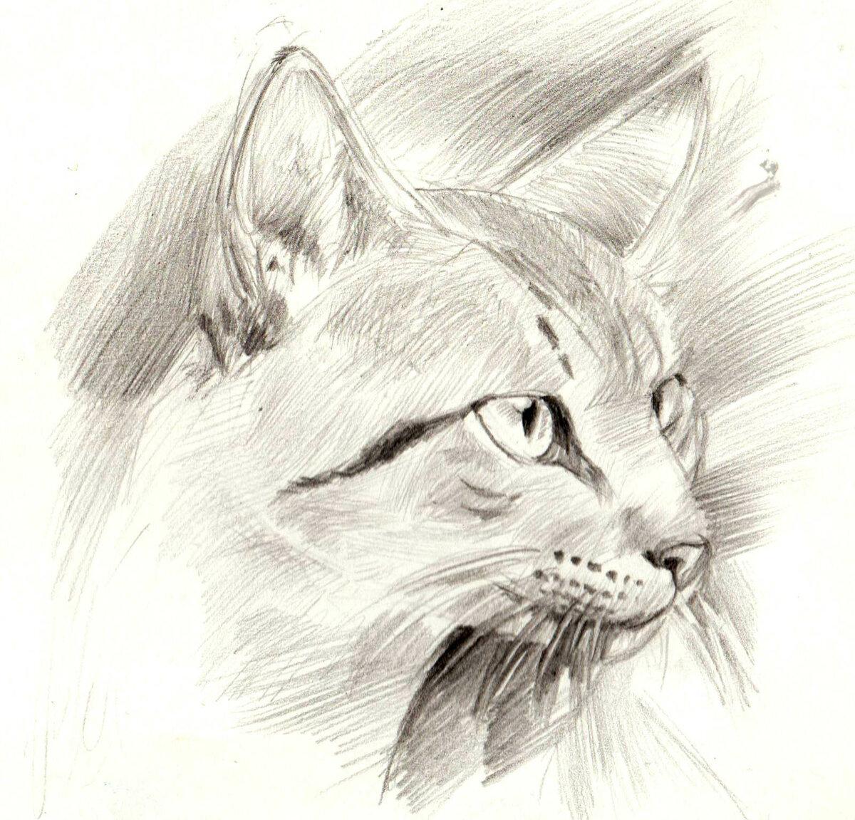 Фото прикольные рисунки красивые карандашом