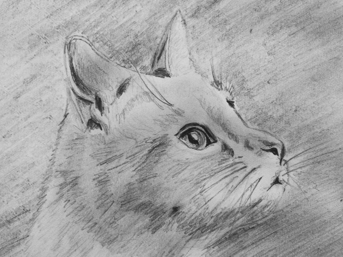 Открытки мартом, рисунки для срисовки легкие и красивые картинки животных карандашом