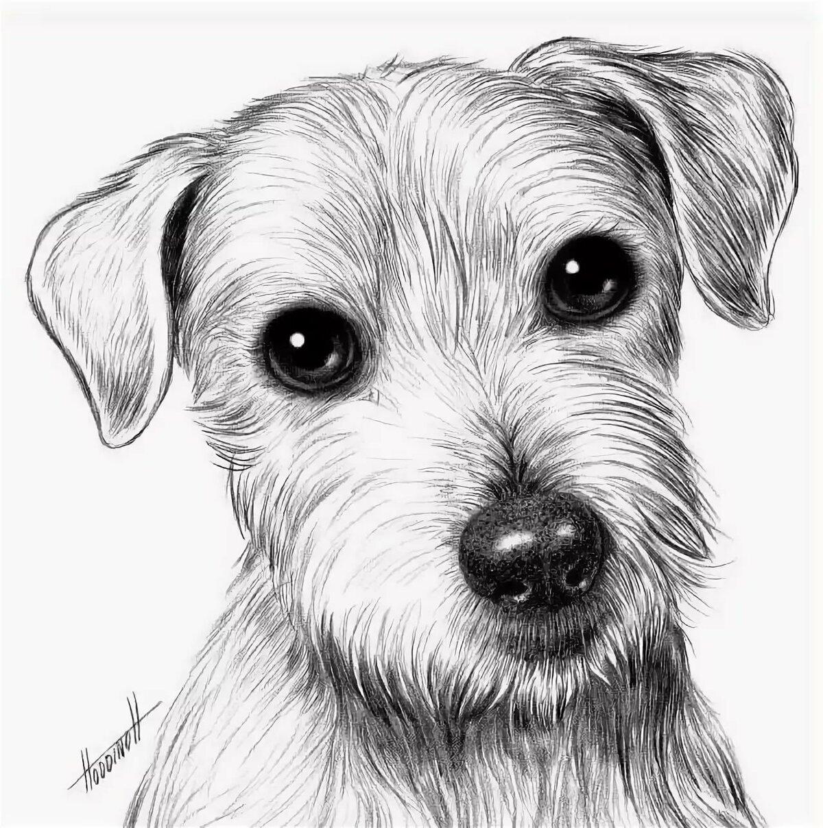 Картинки щеночки для срисовки